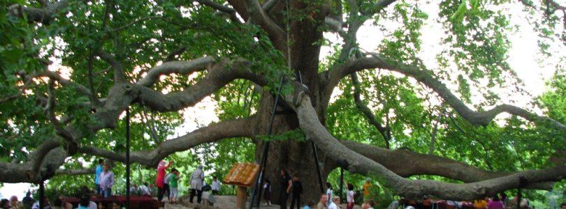 Bursa Gezisi ve 600 Yıllık Çınar