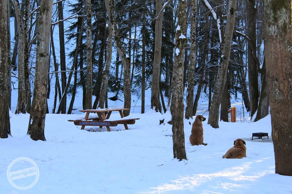 belgrad ormanı kar kış