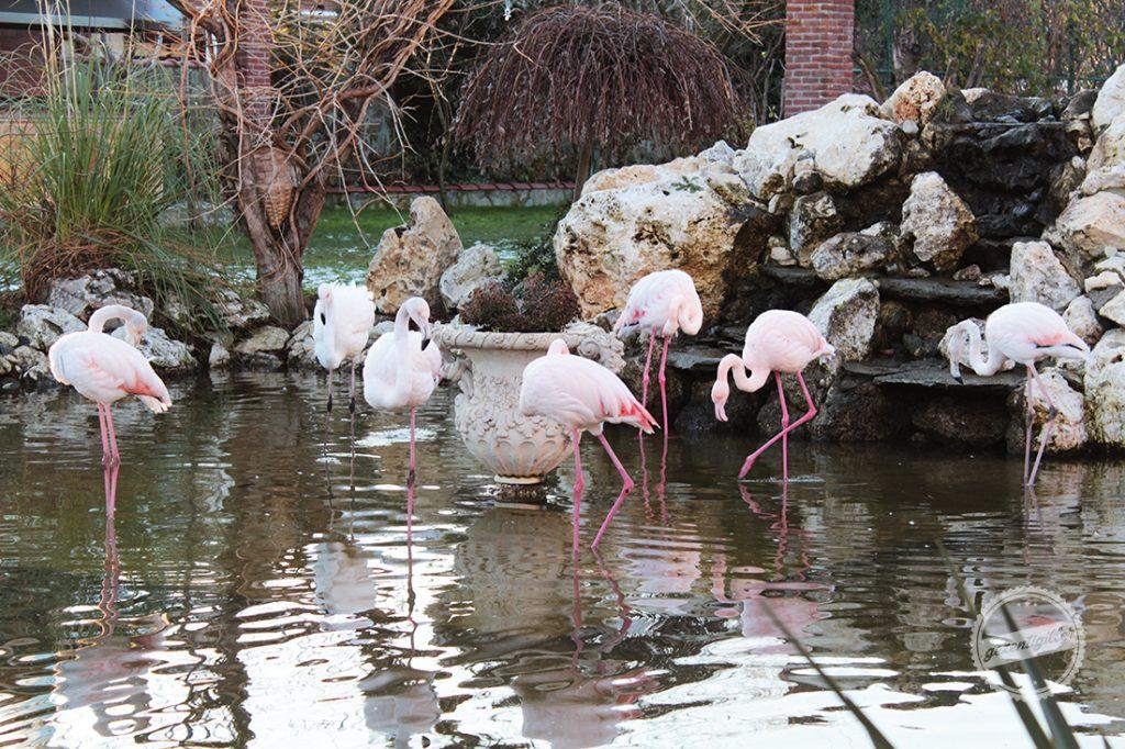 flamingokoy-2