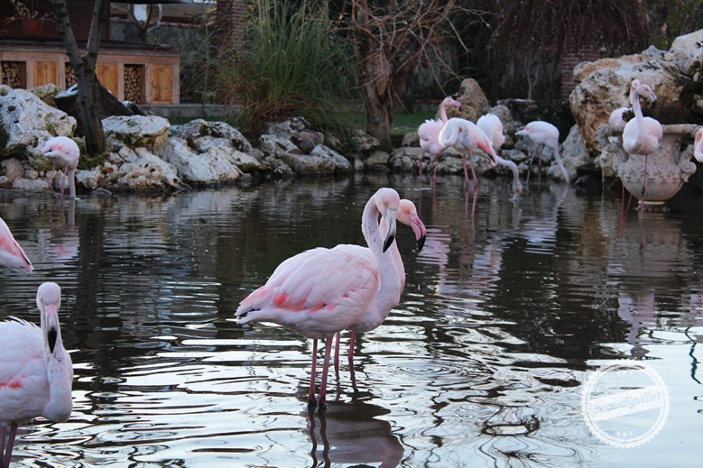 flamingokoy-4