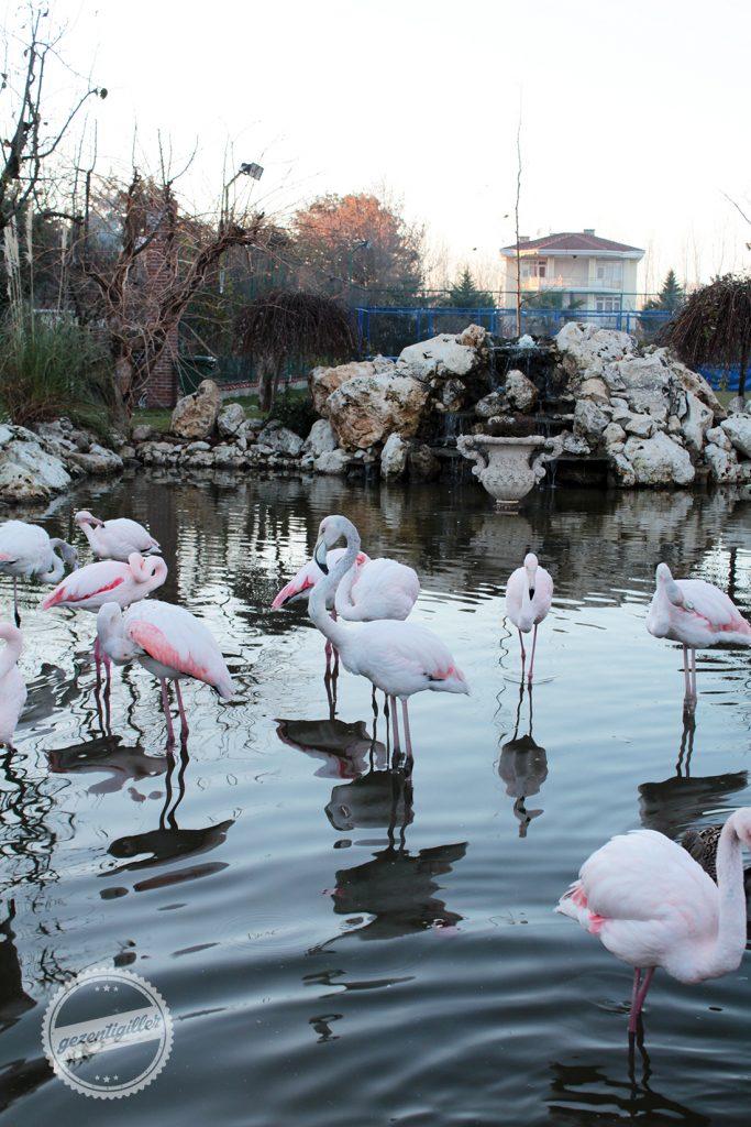 flamingokoy-5