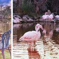 Haftasonu Gezimiz: Bahçeşehir Gölet ve Flamingo Köy